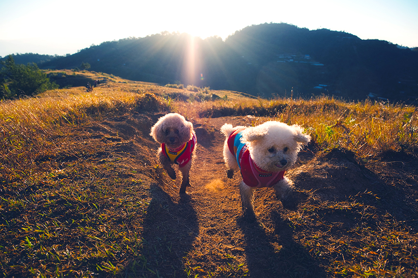 Summer and Bailey, poodles, taking in the sunrise